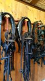 Harness. Harnrss horse leather wood wall harness royalty free stock photography