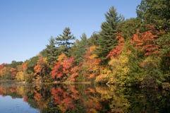 Harold Parker State Park pendant l'automne images stock