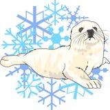 HARP SEAL SNOWFLAKES Royalty Free Stock Photos