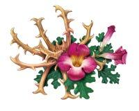 Harpagophytum för jordluckrare för jäkel` s procumbens eller brottningväxt, trä vektor illustrationer