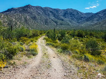 Harquahala  Trail Arizona Royalty Free Stock Photos