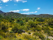 Harquahala  Trail Arizona Royalty Free Stock Image