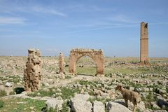 Harran ruines - Anatolia Stock Images