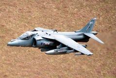 Harrier Photo stock
