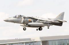 Harrier espagnol Photographie stock libre de droits