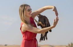 Harrier Hawk flying though the hands of a young lady. Harrier hawk flying thought a loop Stock Photos