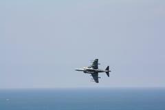 Harrier. Stock Image
