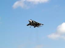 Harrier planant Images libres de droits