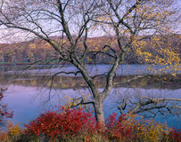 Harriman State Park in autumn Stock Photography