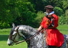 Harris Hawk encapuchado en el guante de un hombre que lleva un traje isabelino rojo que monta un caballo blanco Fotografía de archivo