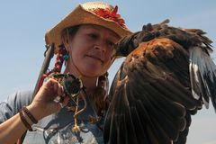 Harris Hawk and the handler Stock Photography