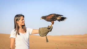 Harris Hawk in training. Harris Hawk sits on a woman`s hand at Dubai Desert Conservation Reserve, UAE Stock Photos