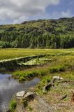 Harrop Tarn Stock Images