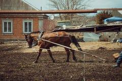 Harrow horse Stock Photo