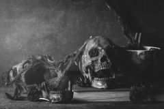 Harrow skull in still life photography style. In dark tone image royalty free stock images
