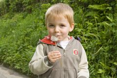 Harry and dandelion seeds. Young boy blowing the tiny parachute seeds from dandelion flower stock photography