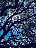Harry Potter-esque Tree royalty-vrije stock fotografie