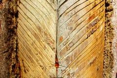 Hars die onderaan de boom stromen Royalty-vrije Stock Foto