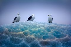 Kittiwakes sitting on top of lace ice Royalty Free Stock Images