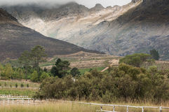 Harsh landscape, Hermanus, South Africa Stock Image