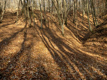 Harsh shadows on the background of fallen leaves Stock Photo