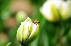 Hart arbeitend Bienen stockfotos
