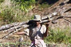 Hart arbeitend Mann, der einen Baumstamm - MADAGASKAR trägt stockbild