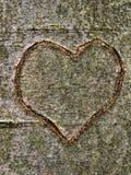 Hart dat in boomboomstam wordt gesneden Royalty-vrije Stock Fotografie