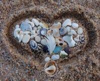 Hart gestalte gegeven inzameling van shells Stock Fotografie
