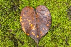 Het Blad van het hart Stock Fotografie