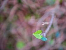 Hart gevormd blad van wilde klimop rond boomboomstam royalty-vrije stock foto's
