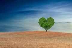 Hart gevormde boom onder blauwe hemel royalty-vrije stock fotografie