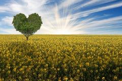 Hart gevormde boom op een geel bloeiend gebied van de canolaverkrachting royalty-vrije stock afbeeldingen