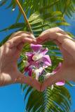 Hart gevormde handen met orchidee op hemelachtergrond royalty-vrije stock afbeeldingen