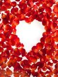 Hart ha modellato i petali di rose su fondo bianco Giorno del `s del biglietto di S fotografia stock libera da diritti