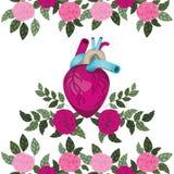 Hart met aders en rozen geïsoleerd pictogram stock illustratie