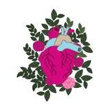 Hart met aders en rozen geïsoleerd pictogram royalty-vrije illustratie