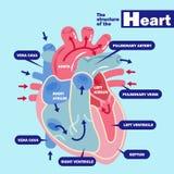 Hart met gezondheidsconcept stock illustratie