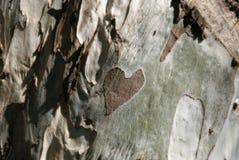 Hart op hout Stock Afbeelding