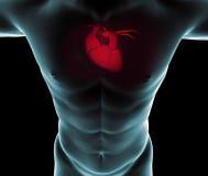 Hart op röntgenstralen in een lichaam wordt gezien dat royalty-vrije illustratie
