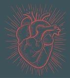Hart op rood royalty-vrije illustratie