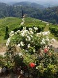 Hart tussen de wijngaard royalty-vrije stock foto