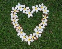 Hart van bloemen Royalty-vrije Stock Fotografie
