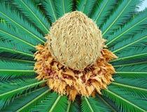 Hart van cactus royalty-vrije stock afbeeldingen