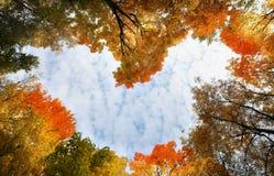 Hart van de herfstbladeren Stock Afbeelding