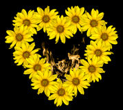 Hart van gele bloemen van decoratieve zonnebloemen Helinthus en geïsoleerde de binnenkant van brandvlammen Stock Afbeeldingen