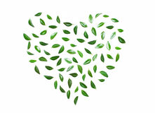 Hart van groene bladeren Royalty-vrije Stock Afbeeldingen