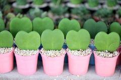 Hart van groene bladeren wordt gevormd dat stock afbeelding