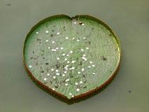 Hart van liefde in de dag van het valentijnskaartseizoen Royalty-vrije Stock Afbeelding