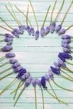 Hart van muscariesbloemen die wordt gemaakt Stock Foto